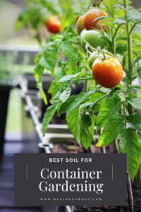 tomato plants growing in large black containers