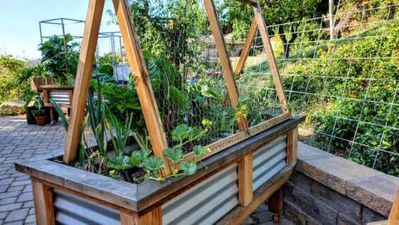 Cucumber trellis in a raised bed garden.