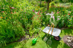 Wheelbarrow with garden tools in front of the flower beds
