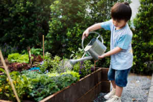 Kid watering plants in a garden