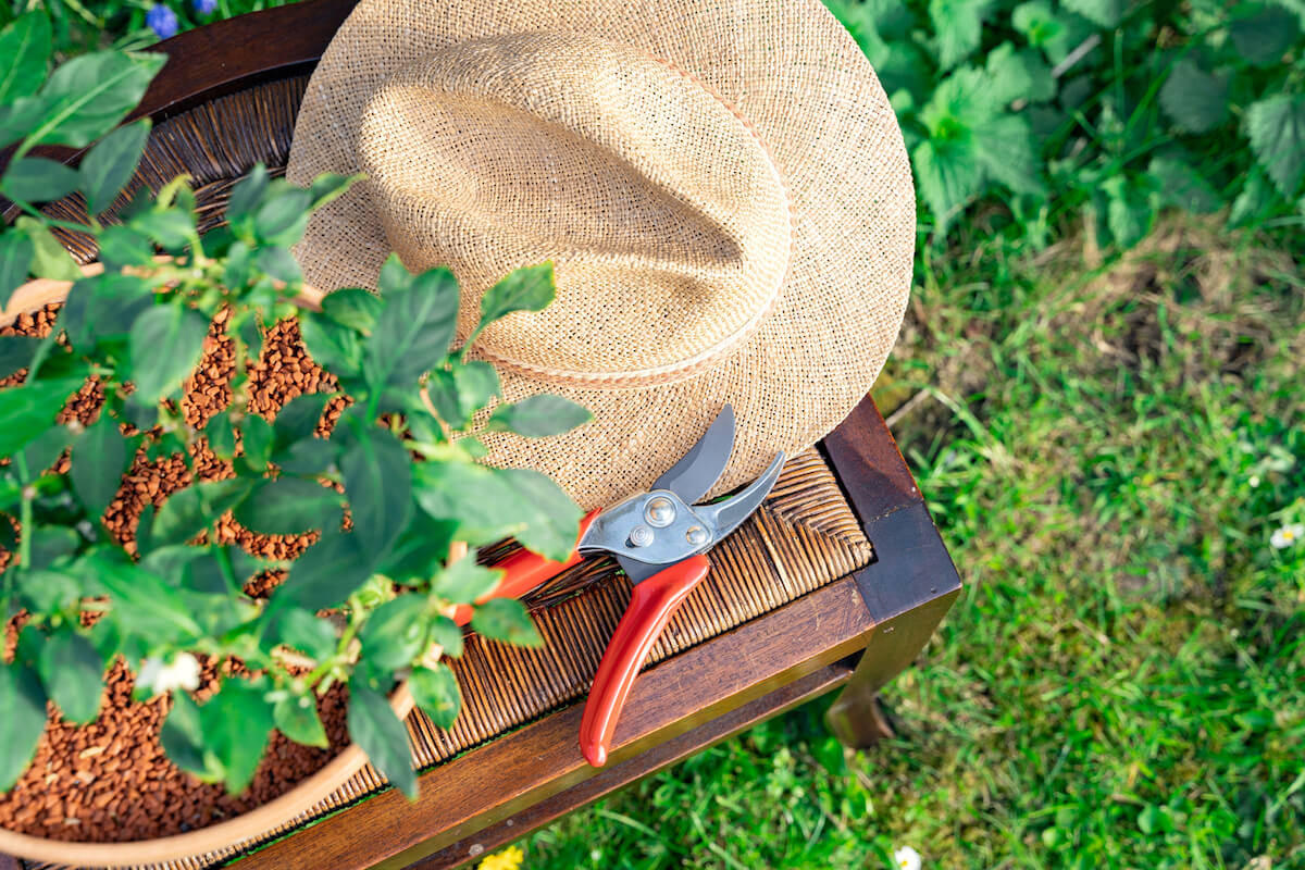 Home plant in pot, straw hat, red pruners on chair on green grass
