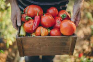 Basket full of tomatoes