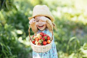 Little girl picking strawberry on a farm field
