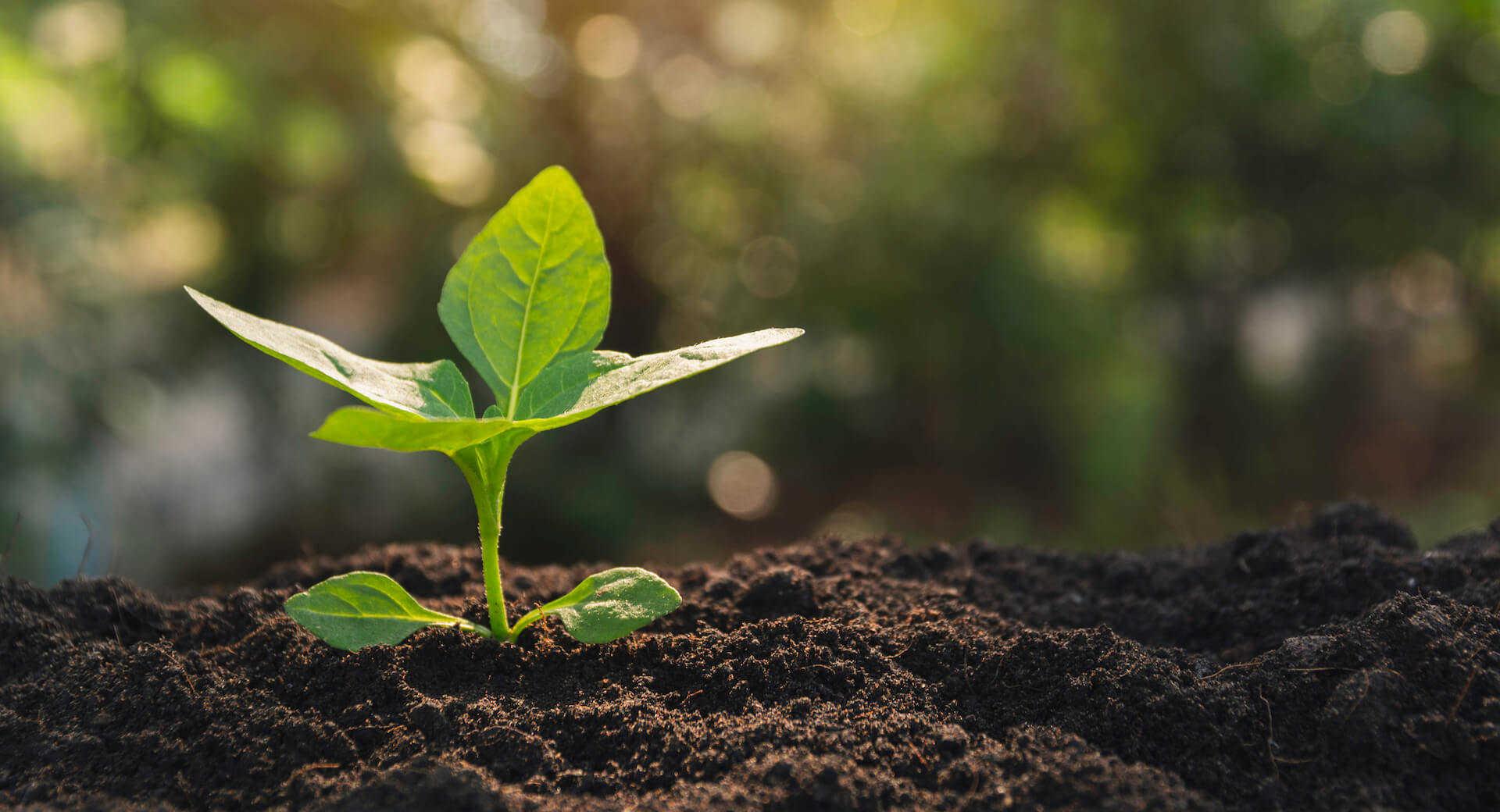 Seedling growing in soil