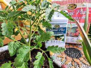 Kellogg organic liquid and granular fertilizers in garden bed