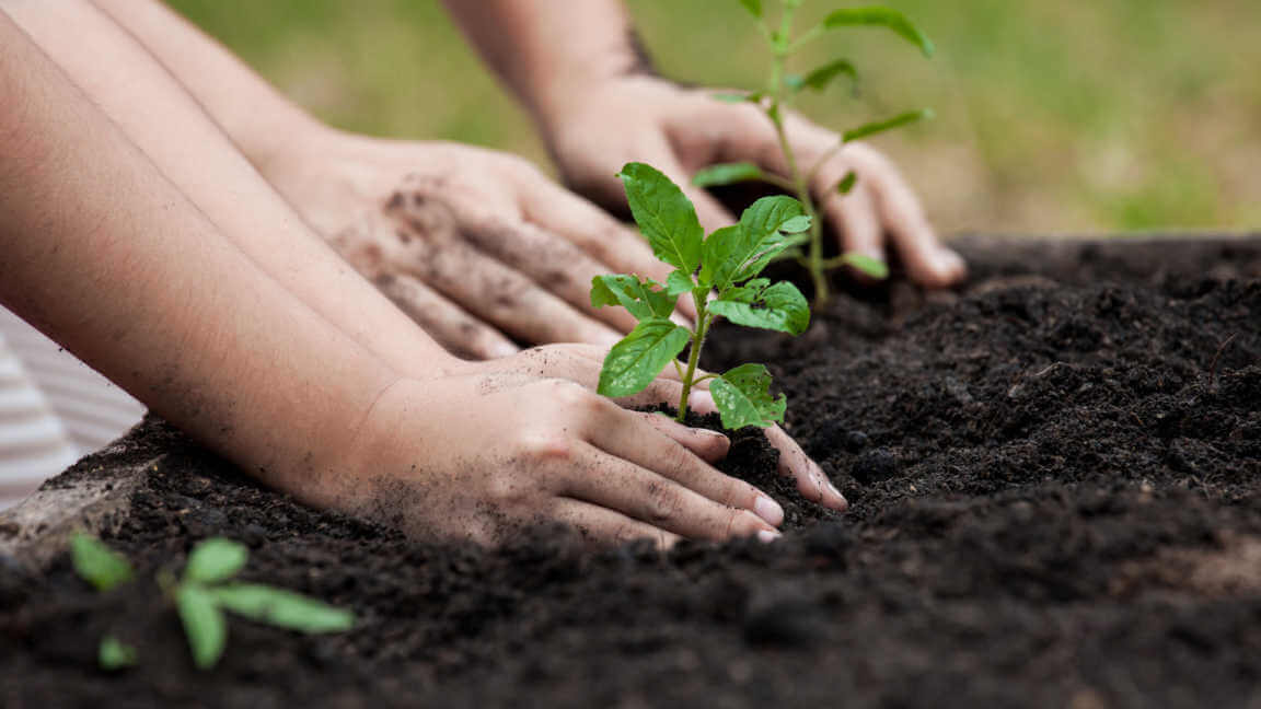 Child and parent hand planting young tree on black soil together