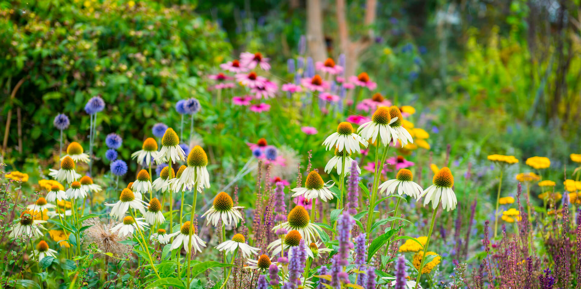Colorful flowerbeds in a beautiful garden