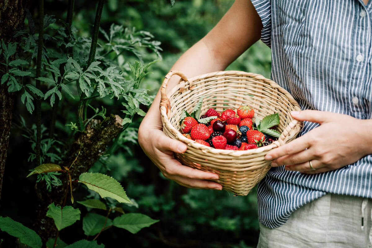 Woman collecting fresh berries