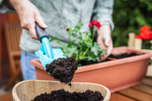 Florist planting flowers outdoors.