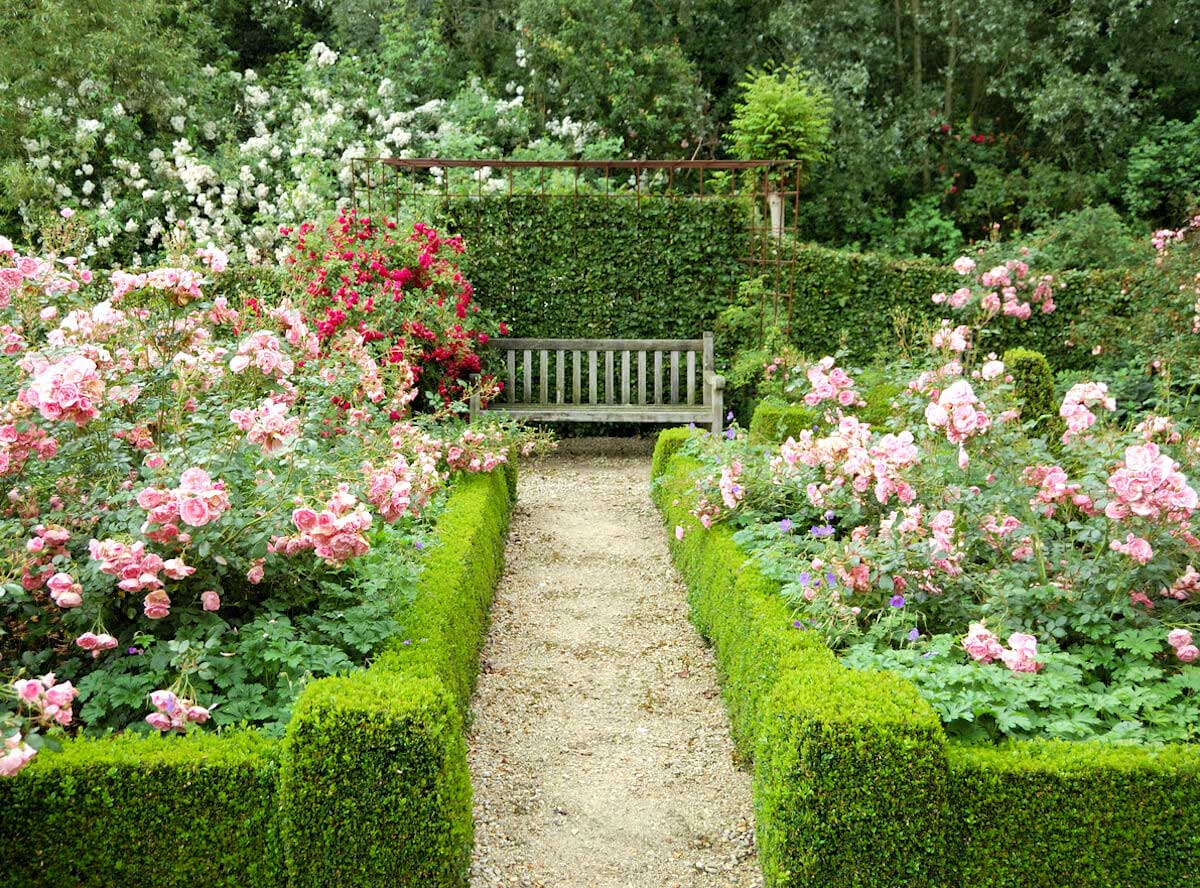 Beautiful garden with rose shrubs.