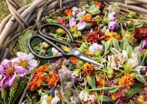 Deadheaded flowers in a basket