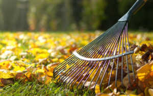 raking leaves off of a lawn