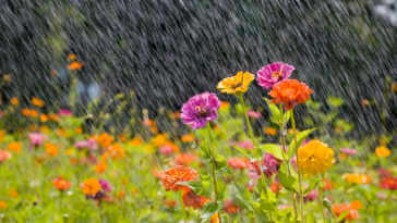Summer rain in a field of colorful flowers