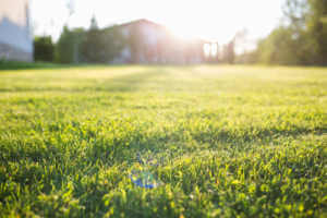 lawn at home on a Sunny summer day