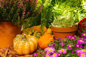 Autumn decoration with pumpkins and flowers