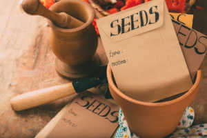 Garden table with seeds envelopes