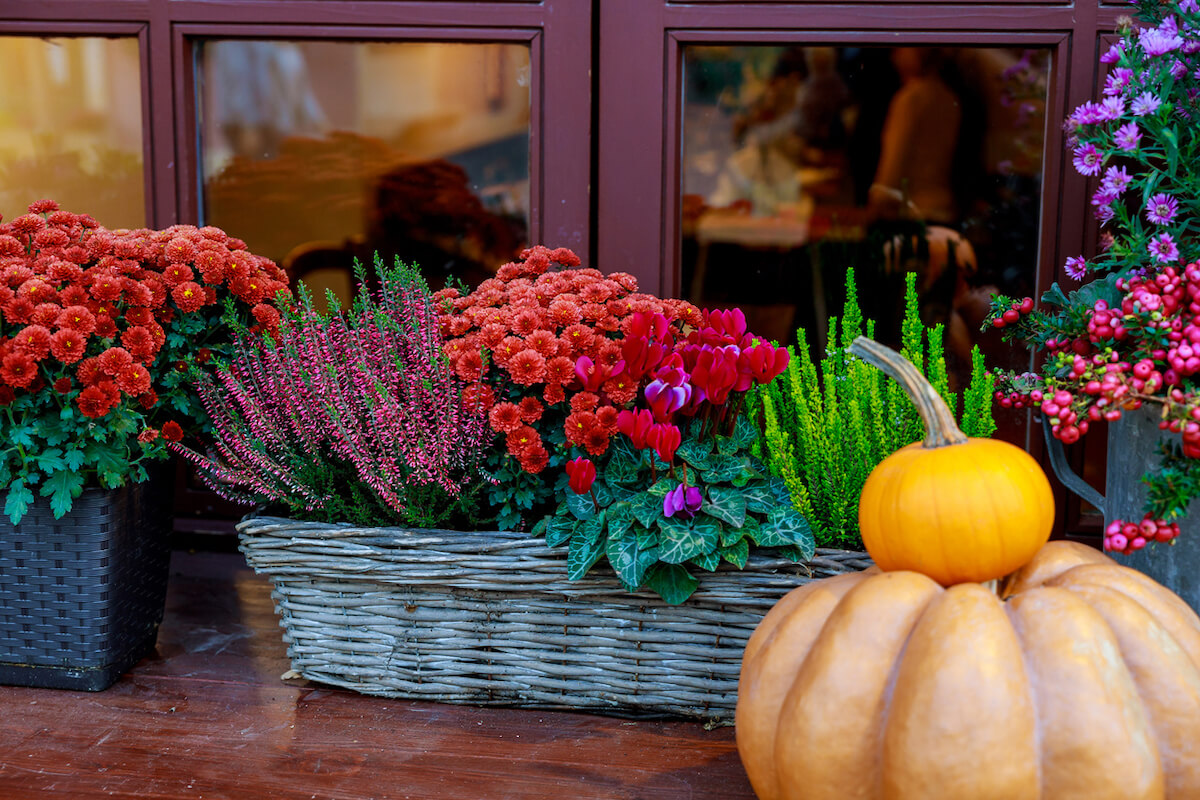 Pumpkin and flowers in baskets.
