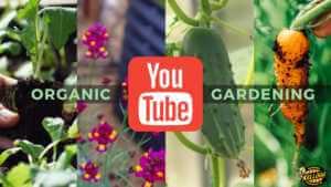 Kellogg Garden YouTube Channel