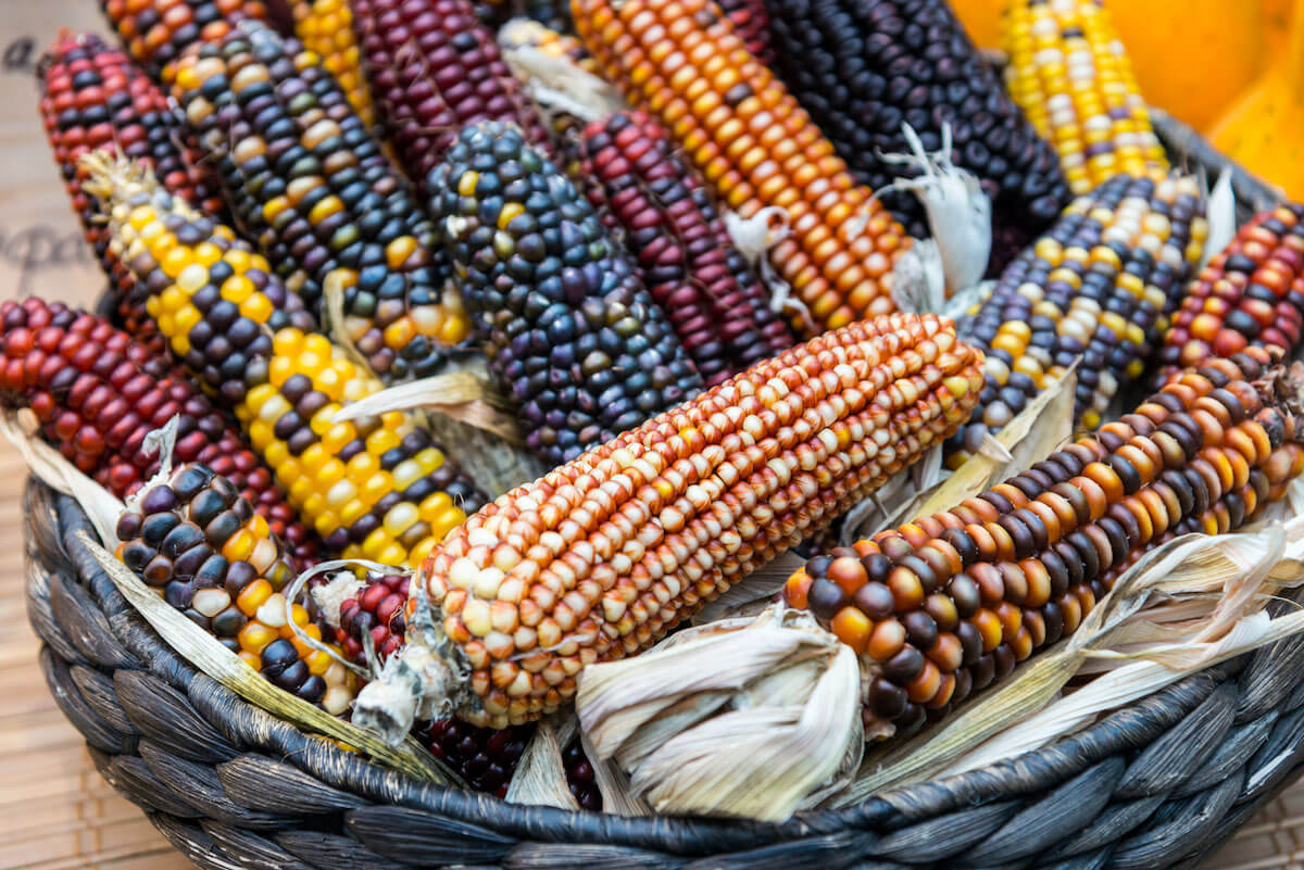a basket full of colorful Indian corn