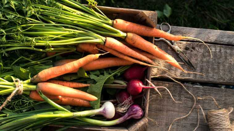 box full of root vegetables