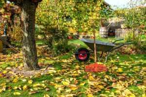 wheelbarrow and rake in yard full of autumn leaves