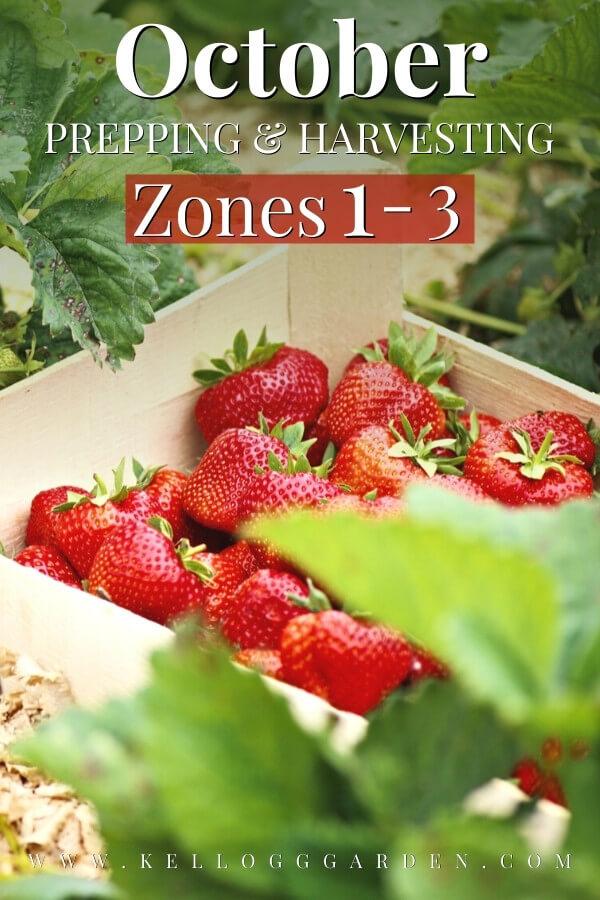 box full of ripe strawberries