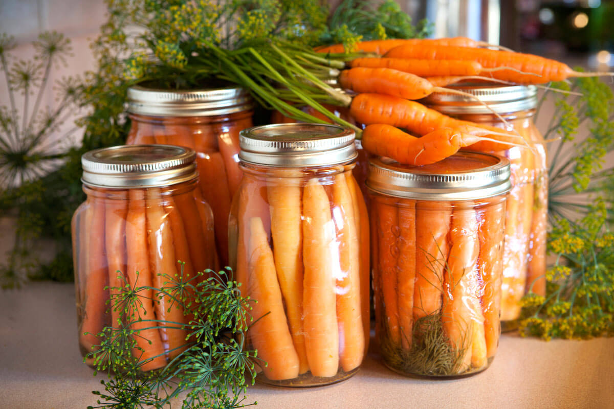 multiple glass mason jars of fermented carrots on counter